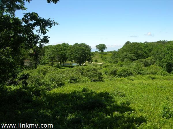 11 High Meadow Chilmark MA